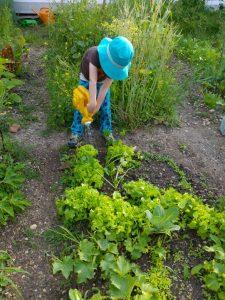 Kind gießt in urbane Gärten